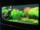 Decorare acvariu cu cuart colorat negru EVIDECOR®
