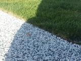 Aplicare covor de piatra din cuart - EVIDECOR®
